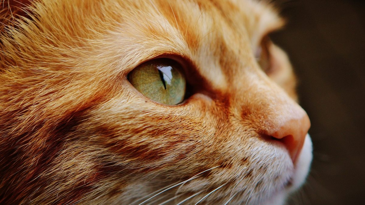 These things should be done by every cat owner whose pet is already 7 years old
